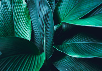Dark Leaves background Blue green Leaf surface Wall mural