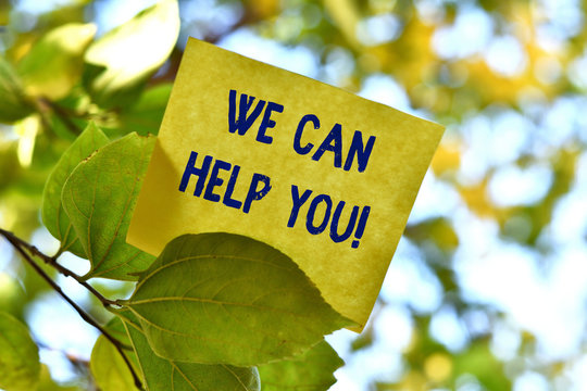 Word writing text We Can Help You. Business photo showcasing offering good assistance to customers or friends Piece of square paper use to give notation on tree leaf under sunny day