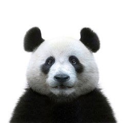 Foto auf Acrylglas Pandas panda bear face isolated on white background