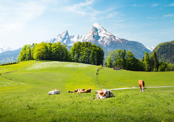 Wall Mural - Idyllic summer landscape in the Alps with cows grazing