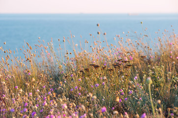 Wall Mural - A field of colorful flowers with sea at the background