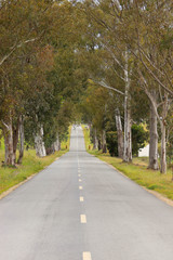 landscape of country road. Countryside road