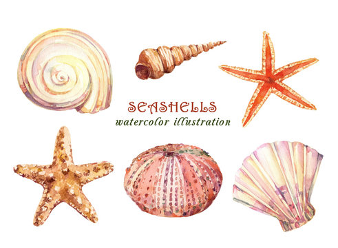Watercolor set of underwater life objects - various tropical seashells,  starfish and sea urchin. Hand drawn illustrations isolated on white background.