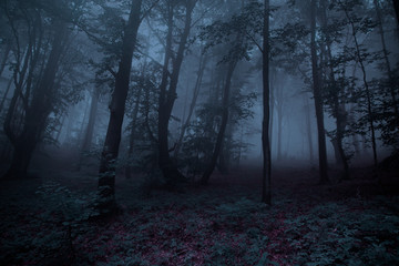 Dark grey scary forest, halloween concept.