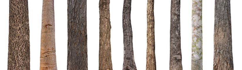isolated tree trunk Collection on White background.