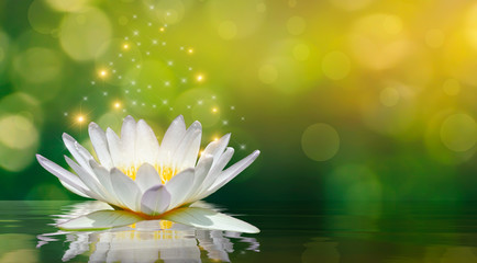Foto auf AluDibond Lotosblume lotus white light purple floating light sparkle background