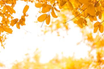 Orange leaves on natural background
