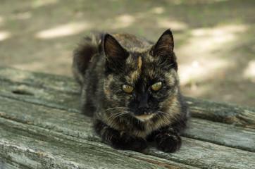 サビ猫の子猫の野良猫