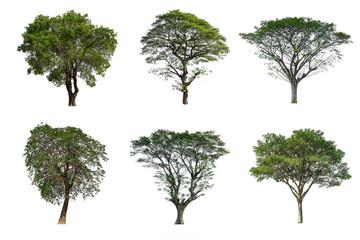 Set of Tree isolated on white background Papier Peint