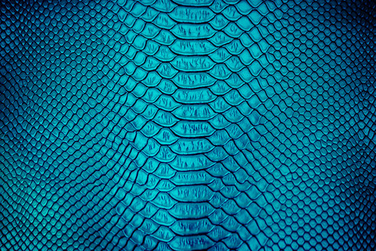 Close up of Luxury snake skin texture