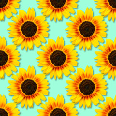 Sunflower seamless background. Bright yellow sunflowers on blue background. Floral pattern.