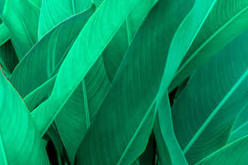Tropical green leaf texture, Green leaves background nature dark green backdrop, Concept nature and plant tropical Fototapete