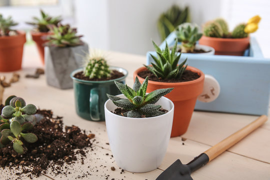Succulents in pots on wooden table