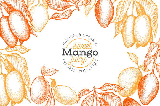 Mango design template. Hand drawn vector tropic fruit illustration. Engraved style fruit. Vintage exotic food banner.