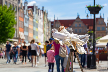 White doves in the old town of Gdansk, Poland
