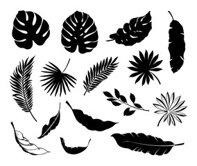 Set of Tropical leaves. Collection black leaves palm, fan palm, banana leaves. Vector illustration.