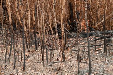 Burnt forest, natural background