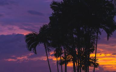 Palm trees over purple tropical sky