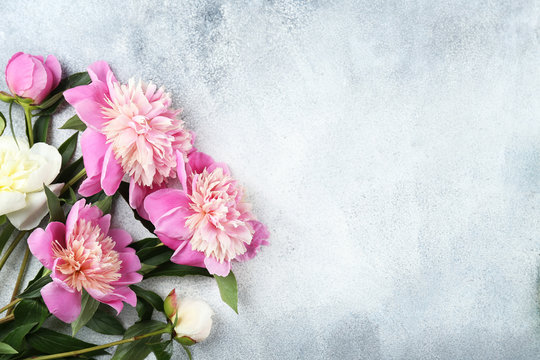 Beautiful pink peony flower blossoms closeup on vintage grunge concrete textured background. Happy International women's mother's valentine's first spring day. Copy space, close up, top view, backdrop