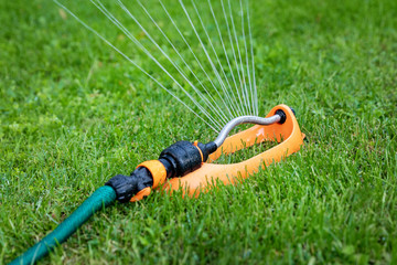 Fototapeta lawn watering - water sprinkler working in green grass at home backyard obraz