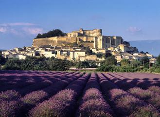 Europe, France, Drome, provence, Grignan lavender field
