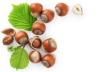 Hazelnut and leaf isolated on white background.