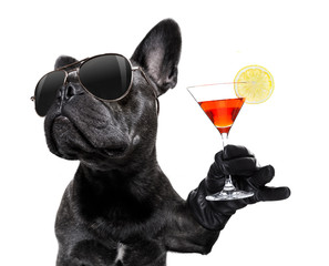 Poster Franse bulldog drunk dog drinking a cocktail