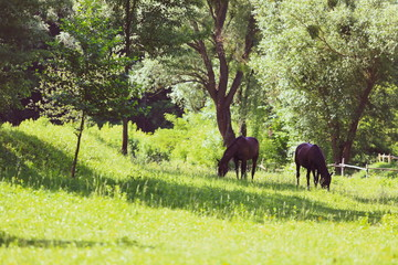 beautiful groomed horses in the forest