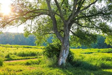 beautiful daytime summer forest landscape