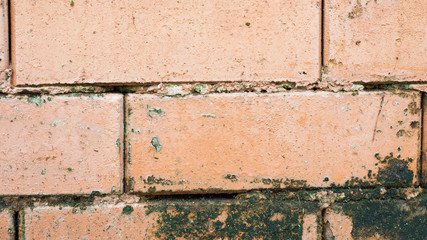 Wall Mural - wall brick background or texture