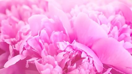Fotoväggar - Beautiful pink peony bouquet background. Blooming peony flowers closeup. Rotation. 4K UHD video footage. 3840X2160
