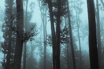 Mysterious dark woods