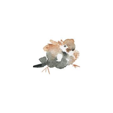 Watercolor realistic sparrow