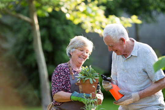 Senior couple potting plants