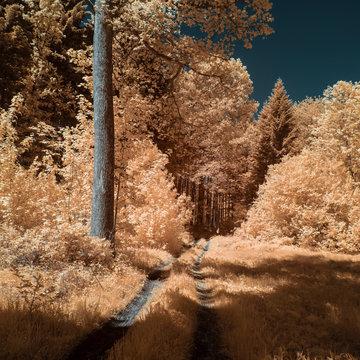 Rural forest during spring in austria, shot in Infrared IR