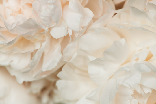 Up Close Of A Bunch Of Light Pink Peonies