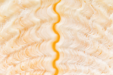 Bear Claw clamshell, closeup