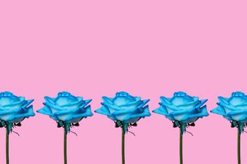five blue roses