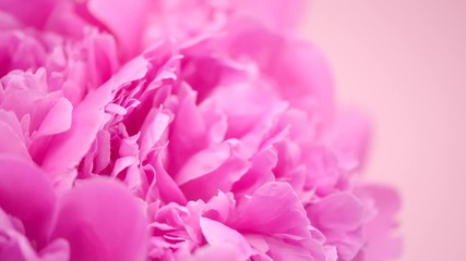 Fotoväggar - Beautiful pink peony bouquet background. Blooming peony flowers closeup. Rotation 4K UHD video footage. 3840X2160