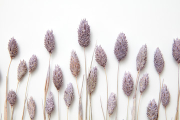 Beautiful floral composition from dry buds painted in violet on a gray background with copy space for text. Natural layout. Flat lay