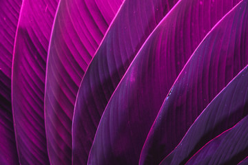 Ultraviolet colorful palm leafs pattern/background