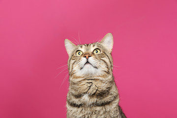 Cute tabby cat on color background. Friendly pet