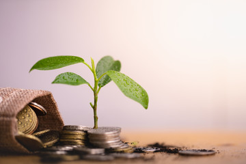 Young plant grow and coins stack, Pension fund, 401K, Passive income, Investment and retirement concept. savings and making money, Business investment growth concept. Risk management.