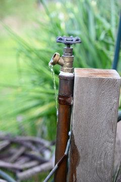 Open water spigot with garden background