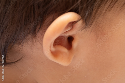 A closeup view on the outer ear and auditory canal of an