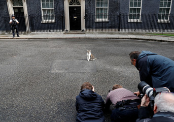 Media members photograph Larry the cat outside Downing Street in London