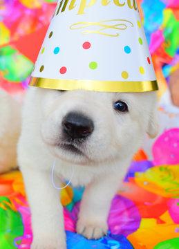 funny birthday cute dog puppy