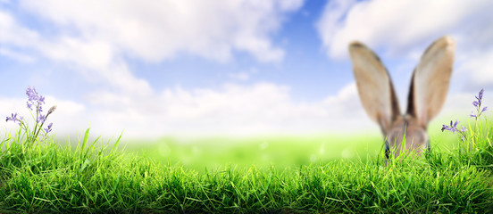 Lush spring green grass background with a sunny summer blue sky over fields   with rabbit ears in...