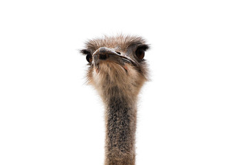 Cute ostrich with huge beautiful eyes on a white background.
