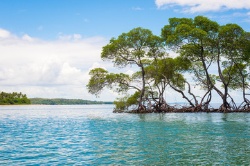 Scenic view from inside a mangrove swamp looking out at the tranquil horizon on the coast in Bahia, Brazil Fototapete